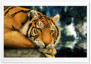 Tiger Painting HD Wide Wallpaper for Widescreen