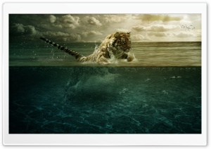Tiger Playing in Water HD Wide Wallpaper for 4K UHD Widescreen desktop & smartphone