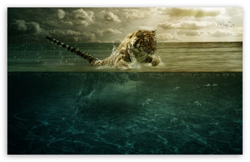 Tiger Playing in Water HD wallpaper for Wide 16:10 5:3 Widescreen WHXGA WQXGA WUXGA WXGA WGA ; HD 16:9 High Definition WQHD QWXGA 1080p 900p 720p QHD nHD ; Standard 4:3 5:4 3:2 Fullscreen UXGA XGA SVGA QSXGA SXGA DVGA HVGA HQVGA devices ( Apple PowerBook G4 iPhone 4 3G 3GS iPod Touch ) ; Tablet 1:1 ; iPad 1/2/Mini ; Mobile 4:3 5:3 3:2 16:9 5:4 - UXGA XGA SVGA WGA DVGA HVGA HQVGA devices ( Apple PowerBook G4 iPhone 4 3G 3GS iPod Touch ) WQHD QWXGA 1080p 900p 720p QHD nHD QSXGA SXGA ;