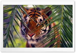 Tiger Prowling HD Wide Wallpaper for Widescreen
