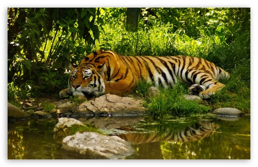 Tiger Resting ❤ 4K UHD Wallpaper for Wide 16:10 5:3 Widescreen WHXGA WQXGA WUXGA WXGA WGA ; 4K UHD 16:9 Ultra High Definition 2160p 1440p 1080p 900p 720p ; Standard 4:3 5:4 3:2 Fullscreen UXGA XGA SVGA QSXGA SXGA DVGA HVGA HQVGA ( Apple PowerBook G4 iPhone 4 3G 3GS iPod Touch ) ; iPad 1/2/Mini ; Mobile 4:3 5:3 3:2 16:9 5:4 - UXGA XGA SVGA WGA DVGA HVGA HQVGA ( Apple PowerBook G4 iPhone 4 3G 3GS iPod Touch ) 2160p 1440p 1080p 900p 720p QSXGA SXGA ; Dual 4:3 5:4 UXGA XGA SVGA QSXGA SXGA ;