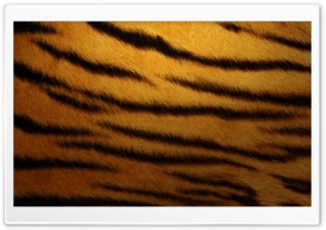 Tiger Skin By K23 HD Wide Wallpaper for Widescreen