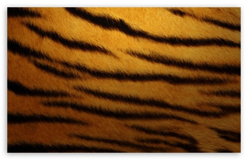Tiger Skin By K23 HD wallpaper for Wide 16:10 5:3 Widescreen WHXGA WQXGA WUXGA WXGA WGA ; HD 16:9 High Definition WQHD QWXGA 1080p 900p 720p QHD nHD ; Standard 4:3 Fullscreen UXGA XGA SVGA ; iPad 1/2/Mini ; Mobile 4:3 5:3 3:2 16:9 - UXGA XGA SVGA WGA DVGA HVGA HQVGA devices ( Apple PowerBook G4 iPhone 4 3G 3GS iPod Touch ) WQHD QWXGA 1080p 900p 720p QHD nHD ;