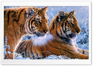 Tigers Ultra HD Wallpaper for 4K UHD Widescreen desktop, tablet & smartphone