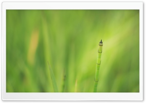 Tilting Green HD Wide Wallpaper for Widescreen
