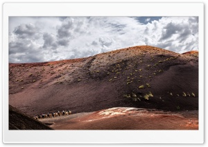 Timanfaya National Park Camel Ride HD Wide Wallpaper for Widescreen