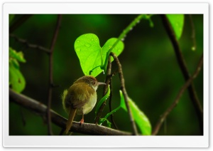 Tiny Bird HD Wide Wallpaper for 4K UHD Widescreen desktop & smartphone