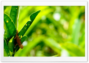 Tiny Chameleon HD Wide Wallpaper for Widescreen