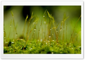 Tiny Drops HD Wide Wallpaper for Widescreen