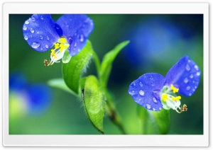 Tiny Flowers Macro HD Wide Wallpaper for 4K UHD Widescreen desktop & smartphone
