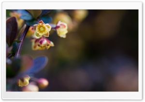 Tiny Flowers Macro HD Wide Wallpaper for Widescreen
