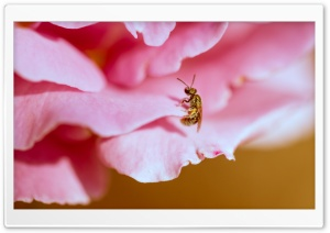 Tiny Insect HD Wide Wallpaper for Widescreen