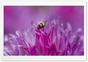 Tiny Insect on a Flower HD Wide Wallpaper for Widescreen