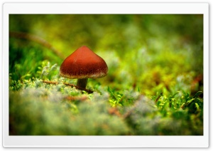 Tiny Mushroom HD Wide Wallpaper for Widescreen