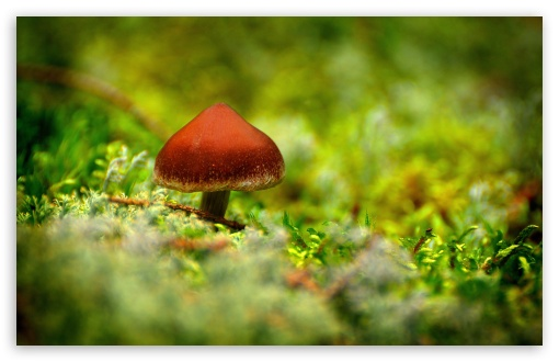 Tiny Mushroom ❤ 4K UHD Wallpaper for Wide 16:10 5:3 Widescreen WHXGA WQXGA WUXGA WXGA WGA ; 4K UHD 16:9 Ultra High Definition 2160p 1440p 1080p 900p 720p ; Standard 4:3 5:4 3:2 Fullscreen UXGA XGA SVGA QSXGA SXGA DVGA HVGA HQVGA ( Apple PowerBook G4 iPhone 4 3G 3GS iPod Touch ) ; Tablet 1:1 ; iPad 1/2/Mini ; Mobile 4:3 5:3 3:2 16:9 5:4 - UXGA XGA SVGA WGA DVGA HVGA HQVGA ( Apple PowerBook G4 iPhone 4 3G 3GS iPod Touch ) 2160p 1440p 1080p 900p 720p QSXGA SXGA ; Dual 16:10 5:3 16:9 4:3 5:4 WHXGA WQXGA WUXGA WXGA WGA 2160p 1440p 1080p 900p 720p UXGA XGA SVGA QSXGA SXGA ;