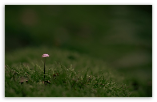 Tiny Mushroom, Green Moss UltraHD Wallpaper for Wide 16:10 5:3 Widescreen WHXGA WQXGA WUXGA WXGA WGA ; UltraWide 21:9 24:10 ; 8K UHD TV 16:9 Ultra High Definition 2160p 1440p 1080p 900p 720p ; UHD 16:9 2160p 1440p 1080p 900p 720p ; Standard 4:3 5:4 3:2 Fullscreen UXGA XGA SVGA QSXGA SXGA DVGA HVGA HQVGA ( Apple PowerBook G4 iPhone 4 3G 3GS iPod Touch ) ; Smartphone 16:9 3:2 5:3 2160p 1440p 1080p 900p 720p DVGA HVGA HQVGA ( Apple PowerBook G4 iPhone 4 3G 3GS iPod Touch ) WGA ; Tablet 1:1 ; iPad 1/2/Mini ; Mobile 4:3 5:3 3:2 16:9 5:4 - UXGA XGA SVGA WGA DVGA HVGA HQVGA ( Apple PowerBook G4 iPhone 4 3G 3GS iPod Touch ) 2160p 1440p 1080p 900p 720p QSXGA SXGA ; Dual 16:10 5:3 4:3 5:4 3:2 WHXGA WQXGA WUXGA WXGA WGA UXGA XGA SVGA QSXGA SXGA DVGA HVGA HQVGA ( Apple PowerBook G4 iPhone 4 3G 3GS iPod Touch ) ;
