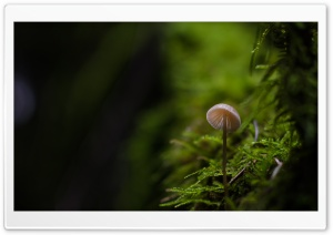 Tiny Mushroom, Moss, Macro Ultra HD Wallpaper for 4K UHD Widescreen desktop, tablet & smartphone