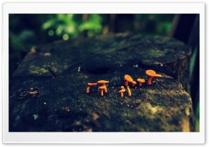 Tiny Mushrooms HD Wide Wallpaper for 4K UHD Widescreen desktop & smartphone