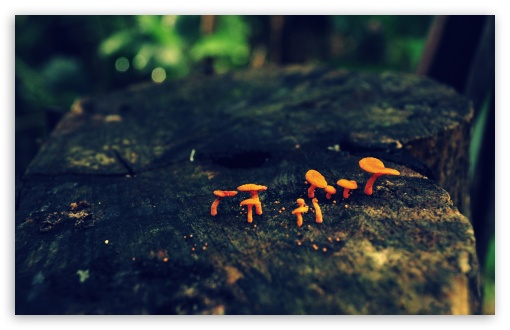 Tiny Mushrooms ❤ 4K UHD Wallpaper for Wide 16:10 5:3 Widescreen WHXGA WQXGA WUXGA WXGA WGA ; 4K UHD 16:9 Ultra High Definition 2160p 1440p 1080p 900p 720p ; Standard 4:3 5:4 3:2 Fullscreen UXGA XGA SVGA QSXGA SXGA DVGA HVGA HQVGA ( Apple PowerBook G4 iPhone 4 3G 3GS iPod Touch ) ; Tablet 1:1 ; iPad 1/2/Mini ; Mobile 4:3 5:3 3:2 16:9 5:4 - UXGA XGA SVGA WGA DVGA HVGA HQVGA ( Apple PowerBook G4 iPhone 4 3G 3GS iPod Touch ) 2160p 1440p 1080p 900p 720p QSXGA SXGA ;