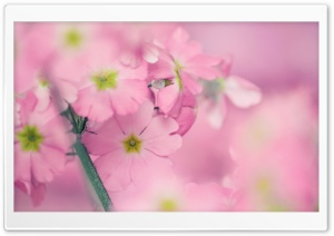 Tiny Pink Flowers Ultra HD Wallpaper for 4K UHD Widescreen desktop, tablet & smartphone