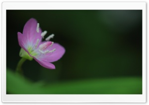 Tiny Purple Flower HD Wide Wallpaper for Widescreen
