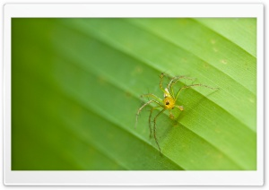 Tiny Spider HD Wide Wallpaper for Widescreen