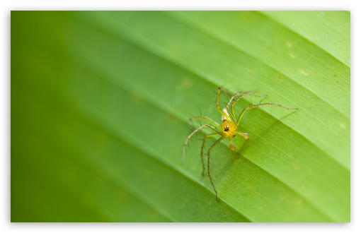 Tiny Spider ❤ 4K UHD Wallpaper for Wide 16:10 5:3 Widescreen WHXGA WQXGA WUXGA WXGA WGA ; 4K UHD 16:9 Ultra High Definition 2160p 1440p 1080p 900p 720p ; Standard 4:3 5:4 3:2 Fullscreen UXGA XGA SVGA QSXGA SXGA DVGA HVGA HQVGA ( Apple PowerBook G4 iPhone 4 3G 3GS iPod Touch ) ; Tablet 1:1 ; iPad 1/2/Mini ; Mobile 4:3 5:3 3:2 16:9 5:4 - UXGA XGA SVGA WGA DVGA HVGA HQVGA ( Apple PowerBook G4 iPhone 4 3G 3GS iPod Touch ) 2160p 1440p 1080p 900p 720p QSXGA SXGA ; Dual 5:4 QSXGA SXGA ;