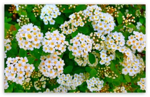 Tiny White Flowers UltraHD Wallpaper for Wide 16:10 5:3 Widescreen WHXGA WQXGA WUXGA WXGA WGA ; UltraWide 21:9 24:10 ; 8K UHD TV 16:9 Ultra High Definition 2160p 1440p 1080p 900p 720p ; UHD 16:9 2160p 1440p 1080p 900p 720p ; Standard 4:3 5:4 3:2 Fullscreen UXGA XGA SVGA QSXGA SXGA DVGA HVGA HQVGA ( Apple PowerBook G4 iPhone 4 3G 3GS iPod Touch ) ; Smartphone 16:9 3:2 5:3 2160p 1440p 1080p 900p 720p DVGA HVGA HQVGA ( Apple PowerBook G4 iPhone 4 3G 3GS iPod Touch ) WGA ; Tablet 1:1 ; iPad 1/2/Mini ; Mobile 4:3 5:3 3:2 16:9 5:4 - UXGA XGA SVGA WGA DVGA HVGA HQVGA ( Apple PowerBook G4 iPhone 4 3G 3GS iPod Touch ) 2160p 1440p 1080p 900p 720p QSXGA SXGA ;