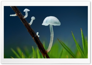 Tiny White Mushrooms HD Wide Wallpaper for Widescreen