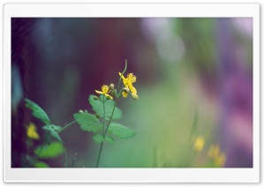 Tiny Yellow Flower HD Wide Wallpaper for Widescreen
