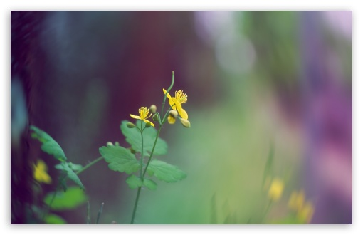 Tiny Yellow Flower ❤ 4K UHD Wallpaper for Wide 16:10 5:3 Widescreen WHXGA WQXGA WUXGA WXGA WGA ; 4K UHD 16:9 Ultra High Definition 2160p 1440p 1080p 900p 720p ; Standard 4:3 5:4 3:2 Fullscreen UXGA XGA SVGA QSXGA SXGA DVGA HVGA HQVGA ( Apple PowerBook G4 iPhone 4 3G 3GS iPod Touch ) ; Tablet 1:1 ; iPad 1/2/Mini ; Mobile 4:3 5:3 3:2 16:9 5:4 - UXGA XGA SVGA WGA DVGA HVGA HQVGA ( Apple PowerBook G4 iPhone 4 3G 3GS iPod Touch ) 2160p 1440p 1080p 900p 720p QSXGA SXGA ; Dual 4:3 5:4 UXGA XGA SVGA QSXGA SXGA ;