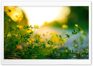 Tiny Yellow Flowers, Green Leaves, Sunlight Bokeh Ultra HD Wallpaper for 4K UHD Widescreen desktop, tablet & smartphone