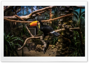 Toco Toucan Perched in Tree HD Wide Wallpaper for 4K UHD Widescreen desktop & smartphone