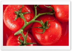 Tomato HD Wide Wallpaper for 4K UHD Widescreen desktop & smartphone