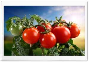 Tomatoes Ultra HD Wallpaper for 4K UHD Widescreen desktop, tablet & smartphone