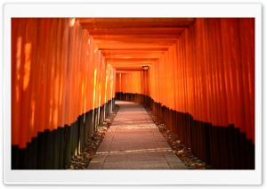 Torii Leading To The Inner Shrine HD Wide Wallpaper for 4K UHD Widescreen desktop & smartphone
