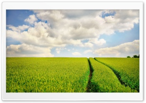 Tractor Trail In Wheat Field HD Wide Wallpaper for Widescreen