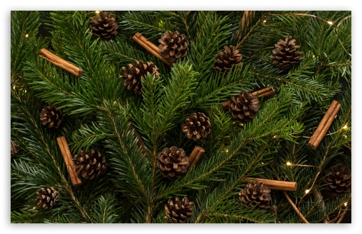 Traditional Christmas Tree Ornaments ❤ 4K UHD Wallpaper for Wide 16:10 5:3 Widescreen WHXGA WQXGA WUXGA WXGA WGA ; UltraWide 21:9 24:10 ; 4K UHD 16:9 Ultra High Definition 2160p 1440p 1080p 900p 720p ; UHD 16:9 2160p 1440p 1080p 900p 720p ; Standard 4:3 5:4 3:2 Fullscreen UXGA XGA SVGA QSXGA SXGA DVGA HVGA HQVGA ( Apple PowerBook G4 iPhone 4 3G 3GS iPod Touch ) ; Smartphone 16:9 3:2 5:3 2160p 1440p 1080p 900p 720p DVGA HVGA HQVGA ( Apple PowerBook G4 iPhone 4 3G 3GS iPod Touch ) WGA ; Tablet 1:1 ; iPad 1/2/Mini ; Mobile 4:3 5:3 3:2 16:9 5:4 - UXGA XGA SVGA WGA DVGA HVGA HQVGA ( Apple PowerBook G4 iPhone 4 3G 3GS iPod Touch ) 2160p 1440p 1080p 900p 720p QSXGA SXGA ; Dual 16:10 5:3 16:9 4:3 5:4 3:2 WHXGA WQXGA WUXGA WXGA WGA 2160p 1440p 1080p 900p 720p UXGA XGA SVGA QSXGA SXGA DVGA HVGA HQVGA ( Apple PowerBook G4 iPhone 4 3G 3GS iPod Touch ) ;