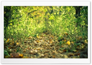 Trail HD Wide Wallpaper for Widescreen