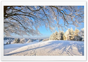 Trails In The Snow HD Wide Wallpaper for Widescreen