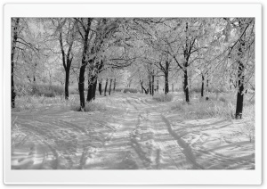 Trails In The Snow, Winter HD Wide Wallpaper for Widescreen