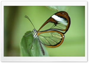 Transparent Butterfly Wings HD Wide Wallpaper for Widescreen