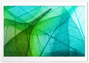 Transparent Leaves Ultra HD Wallpaper for 4K UHD Widescreen desktop, tablet & smartphone