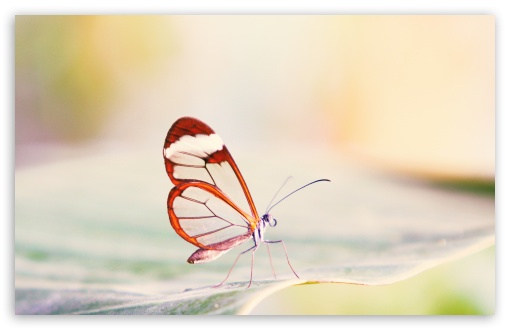Transparent Wings Butterfly HD wallpaper for Wide 16:10 5:3 Widescreen WHXGA WQXGA WUXGA WXGA WGA ; HD 16:9 High Definition WQHD QWXGA 1080p 900p 720p QHD nHD ; Standard 4:3 5:4 3:2 Fullscreen UXGA XGA SVGA QSXGA SXGA DVGA HVGA HQVGA devices ( Apple PowerBook G4 iPhone 4 3G 3GS iPod Touch ) ; Tablet 1:1 ; iPad 1/2/Mini ; Mobile 4:3 5:3 3:2 16:9 5:4 - UXGA XGA SVGA WGA DVGA HVGA HQVGA devices ( Apple PowerBook G4 iPhone 4 3G 3GS iPod Touch ) WQHD QWXGA 1080p 900p 720p QHD nHD QSXGA SXGA ; Dual 4:3 5:4 UXGA XGA SVGA QSXGA SXGA ;