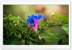 Trapped Flowers Ultra HD Wallpaper for 4K UHD Widescreen desktop, tablet & smartphone