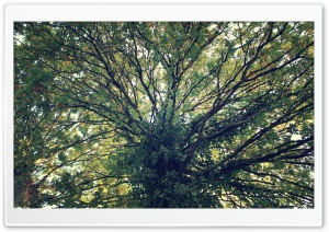 Tree Ultra HD Wallpaper for 4K UHD Widescreen desktop, tablet & smartphone