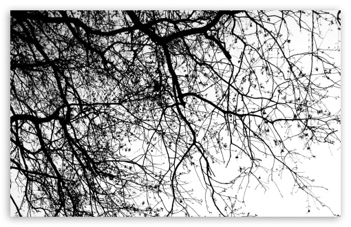 Tree HD wallpaper for Wide 16:10 5:3 Widescreen WHXGA WQXGA WUXGA WXGA WGA ; HD 16:9 High Definition WQHD QWXGA 1080p 900p 720p QHD nHD ; Standard 4:3 5:4 3:2 Fullscreen UXGA XGA SVGA QSXGA SXGA DVGA HVGA HQVGA devices ( Apple PowerBook G4 iPhone 4 3G 3GS iPod Touch ) ; Tablet 1:1 ; iPad 1/2/Mini ; Mobile 4:3 5:3 3:2 16:9 5:4 - UXGA XGA SVGA WGA DVGA HVGA HQVGA devices ( Apple PowerBook G4 iPhone 4 3G 3GS iPod Touch ) WQHD QWXGA 1080p 900p 720p QHD nHD QSXGA SXGA ;