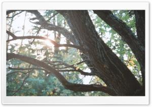 Tree HD Wide Wallpaper for 4K UHD Widescreen desktop & smartphone