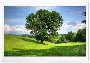 Tree HD Wide Wallpaper for 4K UHD Widescreen desktop & smartphone