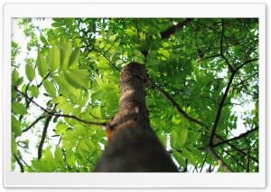Tree Ultra HD Wallpaper for 4K UHD Widescreen desktop, tablet & smartphone